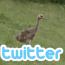 ツイッターの超基礎的内容について